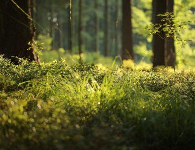 forest-floor-4700814_1280